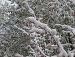 Первый снег 2008