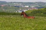 Конь в поле отдыхает.