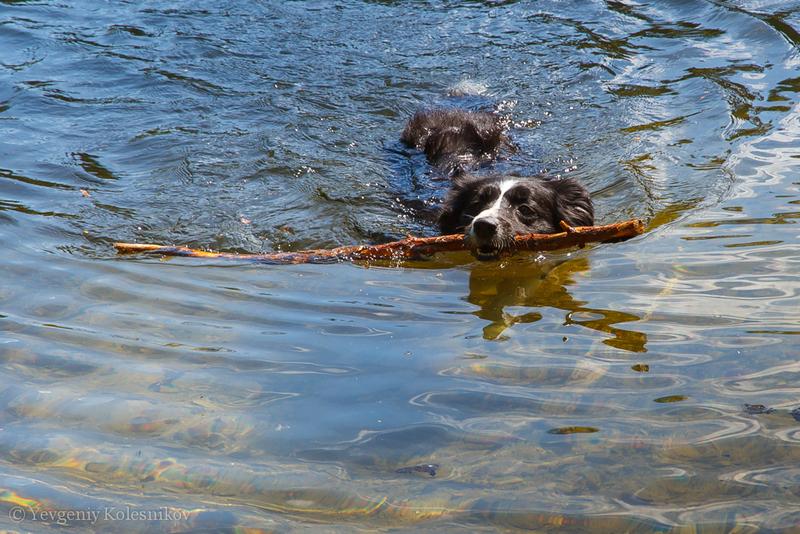 Водные игры