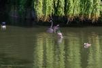 Пернатые на озере в городе Det