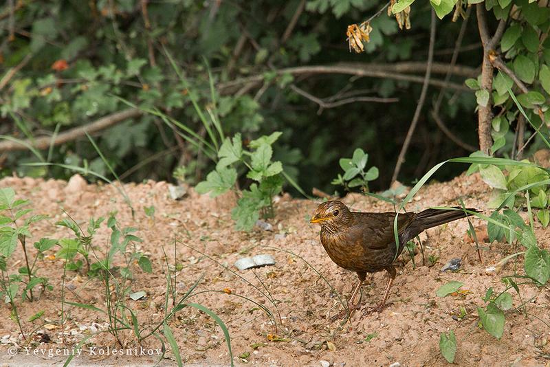 Любопытный птиц :-)