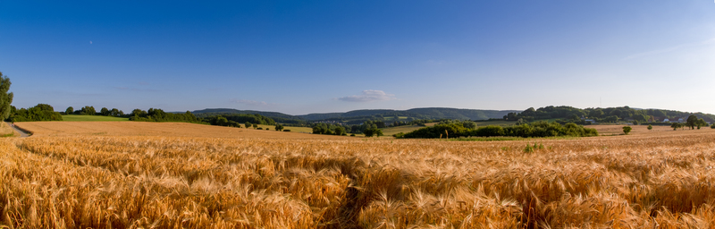 Панорама Detmold
