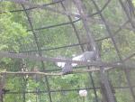 Зоопарк в Алмате