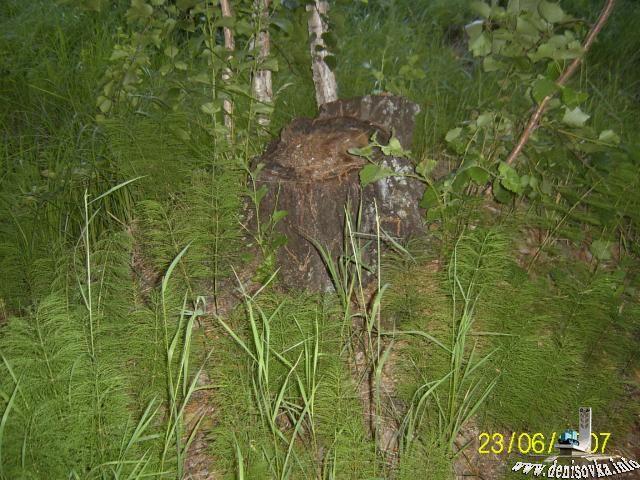 Это для стариков хорошо кгда в лесу одни пеньки.