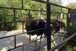Зоопарк г. Николаев (Укр)