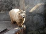Зоопарк г. Николаев ( Укр.)